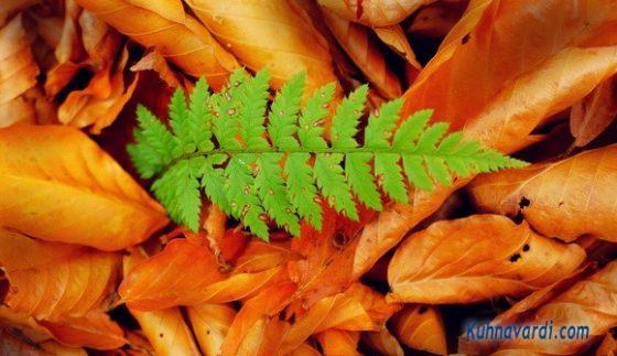 جنگل الیمسان