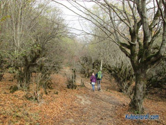 جنگل الیمسان - قبل از دشت