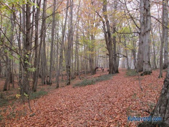 جنگل الیمسان - بعد از دشت