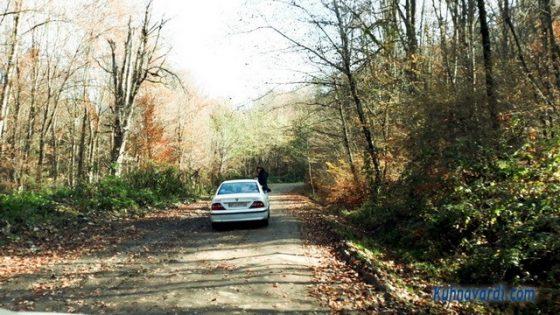 جنگل سنگده - مسیر جنگل راش