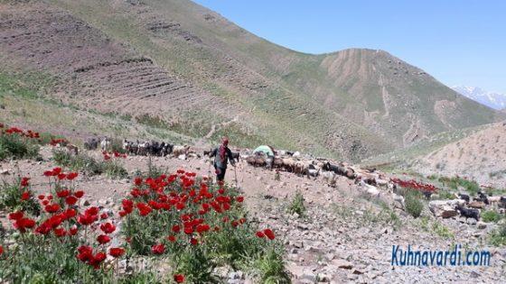 قله وروشت - محدوده گوسفندسرا